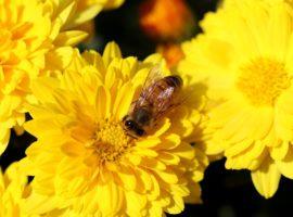 Coldiretti, in Abruzzo il caldo riporta a lavoro anche le api
