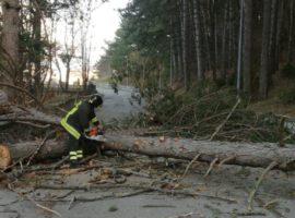Vigili del fuoco impegnati per i danni da vento forte. I danni a L'Aquila, Ovindoli e Avezzano
